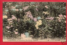 NAGASAKI JAPAN CHRYSANTHEMUM OF NAKASHIMA HOT SPRING  JAPANESE EARLY   POSTCARD