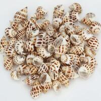 90Pcs Sea Babylon Shells Snail Natural Seashells Conch Aquarium DIY Decoration