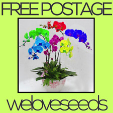 LOCAL AUSSIE STOCK - Rainbow Butterfly Orchid, Bonsai Flower Seeds ~10x