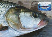 Fishing Fish Asp Aspius Aspius Finland Mint Maxi FDC Card 2003
