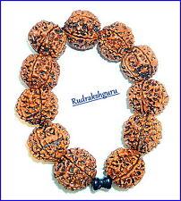 6 Mukhi Rudraksha Bracelet - Nepal Bead / Mars Bracelet