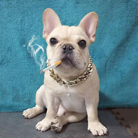 Adjustable Pet Puppy Dog Collar Punk Style Gold-Plated Dog Cat Safety Collar