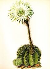 Vintage Cactus Print Botanical Print Beautiful Easter Lily Cactus Print  #2330