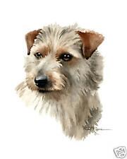 Norfolk Terrier Wc Dog Art 11 x 14 Print Sgn Djr W/Coa