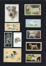 SEALYHAM TERRIER MOUNTED COLLECTION OF VINTAGE DOG CARDS GREAT GIFT