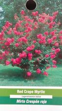 Red Crape Myrtle 5 gal. Tree Flower Plants Plant Flowers Grow Healthy Trees Home