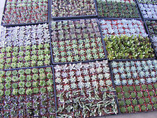 20 Assorted Succulent Plants - 2 inch pot - Many varieties !!!!