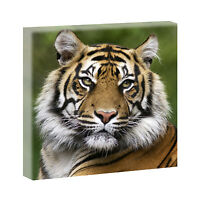 Bilder Keilrahmen  Leinwand Kunstdruck Wandbild Deko XXL Tiger 80 cm*80 cm 313