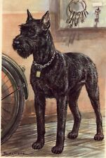 * Giant Schnauzer - Dog Art Print - Clearance