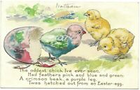 Easter Postcard Oddest Chick Feathers Pink Blue Green Egg Chicks Embossed Rare