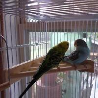7'' Pet Parrot Supply Wood Corner Shelf Laddered Platform Stand for Birds Cages~