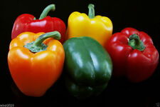 Sweet Bell Pepper,Organic,50 Seeds Mixed Red,yellow,Orange Excelent in Container