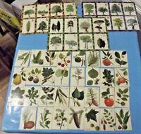 Ancienne Boîte de jeu Éducatif des arbres leurs feuilles fruits  Fernand Nathan