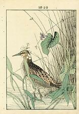 1891 Keinen Imao 1st Ed Japanese Woodblock Bird Print Arrowhead, Water Rail