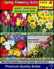TULIP / Daffodil / Freesia / Ranunculus BULBS- ..150x BULBS -  PACK 4