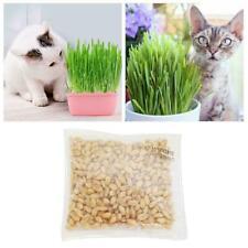 Cat Grass Soilless Culture Kit- 300Seeds, Environmental Bag Plant E8F1