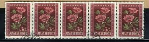 1950 Hungary Peonies💮 5-Stamp Strip Scott #906/A183 30F Canc/NH