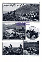 Hirschjagd in Schottland 1929 XL Seite 6 Abb. Hochmoor Jagd Hirsch +