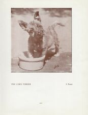 CAIRN TERRIER CUTE PUPPY OLD VINTAGE 1934 DOG PRINT PAGE