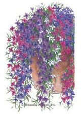 50+  LOBELIA REGATTA TRAILING MIX  PERENNIAL FLOWER SEEDS