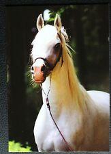 Postkarte Dschunaid,Marbach,Araber Pferd,Arabische Pferde,Tiere,AK,Ansichtskarte