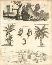 1802  Bird Catching Plantain Banana Tree Fire Ship Copperplate