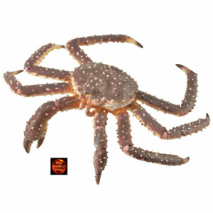CollectA King Crab Sealife Toy Model Figure 88851 Brand New