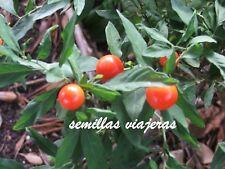 Solanum pseudocapsicum, cereza de Jerusalén 20 semillas seeds graines samen