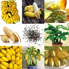 100x Zwerg Bananenbaum Samen Mini Bonsai Pflanze Seltene Garten Früchte Samen