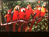 Vintage Postcard>1957>Florida Parrots (now Jungle Island)>Parrot Jungle>Miami>FL