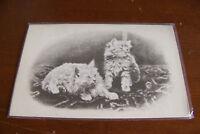 Rare Vintage Antique Postcard A1 Animal Cats Kittens Meow Long Hair Cute