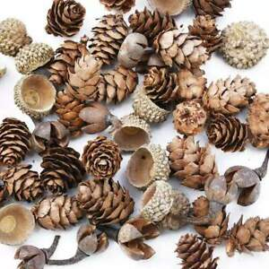 50 Pack Dried Seed Pods for DIY Decorations - Christmas Decor - Floristry