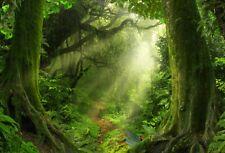 10x8Ft Green Fantasy Forest Vinyl Photo Backdrop Studio Photography Background