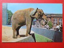 POSTCARD LONDON ZON - AFRICAN ELEPHANR