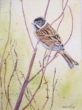 Reed Bunting. Painting ,Original signed work. Mounted . wildlife,birds