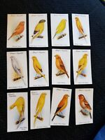 Aviary and Cage Birds - John Player & Son (1933) Complete Your Set