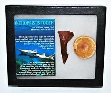 Onchopristis Vertebra & Tooth Fossil 2 1/4 inches w/Mdb 100 Myo 14576 10o