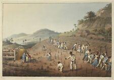 Antigua 1823 African Slaves Digging Cane Holes Black Slavery 7x5 Inch Print