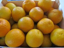 frische spanische Orangen 7 Kilo