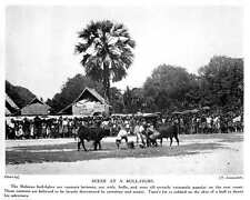 1913 Scene At A Bullfight On East Coast Of Malaya