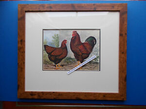CHICKEN PRINT FRAMED (D) EARLY PRINT