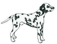 Ecusson patche Dalmatien thermocollant patch chien brodé
