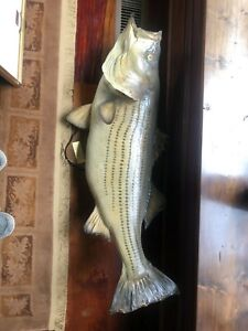 Striped Bass Freshwater Taxidermy Fish Mount For Sale