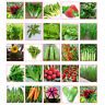 New 34 Types Non-GMO Seeds Vegetable Garden Seed Bank Organic Survival Plant
