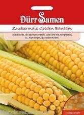 Zuckermais Golden Bantam Zea mays Supersüß im Geschmack Mais 65 Korn Dürr Samen