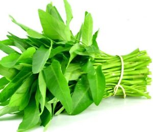 1000+ (selected seeds) Rau Muong, Ong Choy, Water Spinach White Seed USA Seller