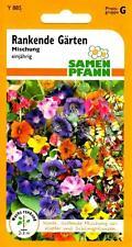 Rankende Gärten - bunte, duftende Mischung aus Kletter- & Schlingpflanzen Samen