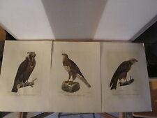 3 farbige Lithografien, Greifvögel, Reproduktionen nach alten Stichen.