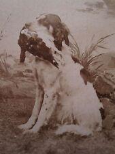 ANTIQUE NORWEGIAN NORWAY BIRD LONG HAIRED HUNTING DOG CDV MATHIESEN FINE PHOTO