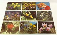 "LOT 9 Vintage SWISS Switzerland Stehli 4.5"" x 5.75"" Postcards FLOWERS unposted"